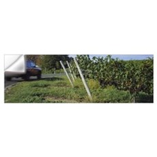 Car moving on the road along a vineyard, Traverse Wall Decal
