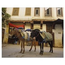 Two mules standing in front of a building, Fez, Mo Canvas Art