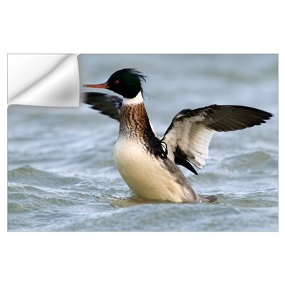 Red-breasted Merganser drake stretching wings, Noo Wall Decal