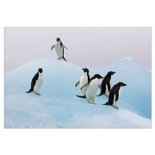 Adelie Penguin six pengiuns standing on iceberg