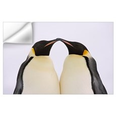 Emperor Penguin pair courting Wall Decal