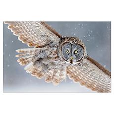 Flying through snowfall Poster