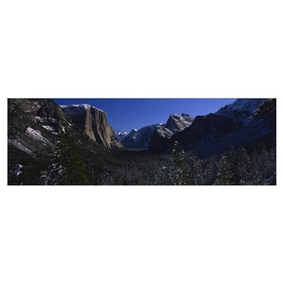 Trees in a forest, Yosemite Valley, Yosemite Natio Poster