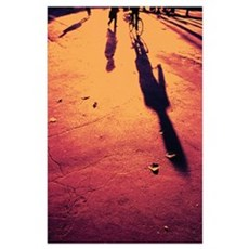 Bicycles And Shadows On Road Poster