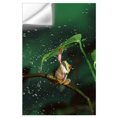 Red-eyed Tree Frog in rain Wall Decal