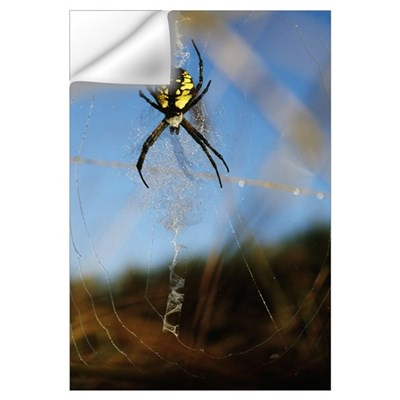 Black-And-Yellow Argiope Spider (Argiope Aurantia) Wall Decal