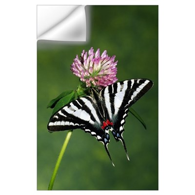 Zebra swallowtail butterfly on clover flower bloss Wall Decal