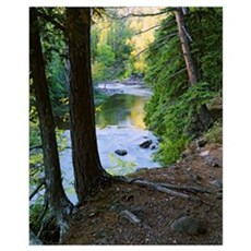 View of Gooseberry River through forest trees, Goo Poster