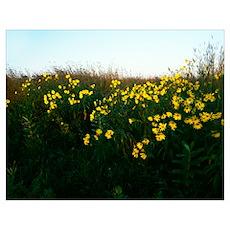 Wildflowers blooming on prairie, Hayden Prairie St Poster