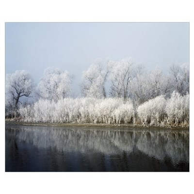 Hoarfrost-covered trees along Mississippi River, U Poster