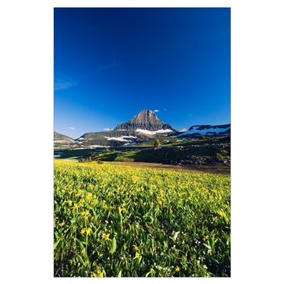 Mount Reynolds and blue sky, blooming glacier lili Poster