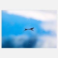 Feather floating on calm water of Little Bitterroo
