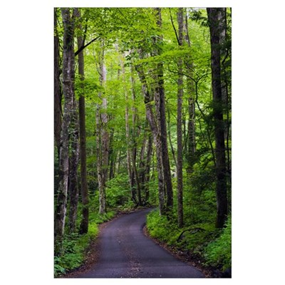Roaring Fork Road winding through spring forest, G Poster
