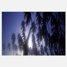 Palm trees, Molokai, Hawaii