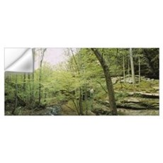 Trees in a forest, Ferne Clyffe State Park, Illino Wall Decal