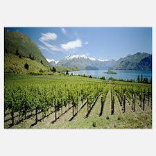 Vineyard in front of a lake, Rippon Vineyard, Lake