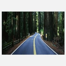 Road winding through redwood forest, Highway 101 ,