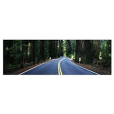 Road winding through redwood forest, Highway 101 , Poster
