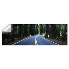 Road winding through redwood forest, Highway 101 , Wall Decal