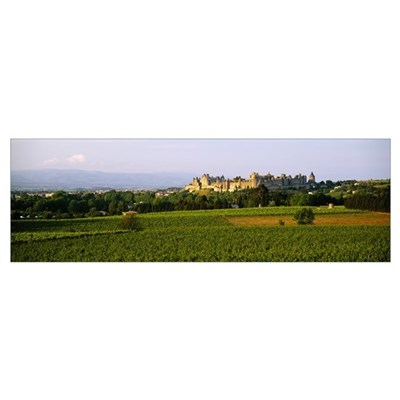 Vineyards in front of a castle, Carcassonne, Langu Poster