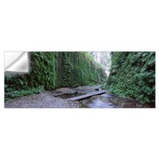 Trees in a forest, Fern Canyon, Prairie Creek Redw Wall Decal