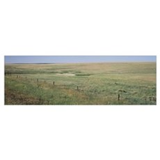 Prairie grass on a landscape, Kearney County, Nebr Poster