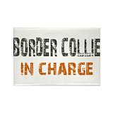 Border collie Magnets