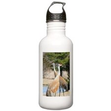 Sandhill Crane Water Bottle