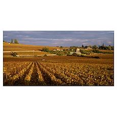 Vineyards in Bourgogne France Poster