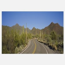 Winding road passing through a landscape, Saguaro