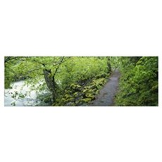 Path along a river in the forest, Burney Creek, Mc Poster