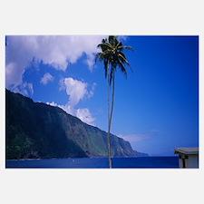 Low angle view of a palm tree near a bay, Awahua B
