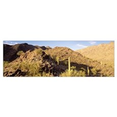 Cacti Sierra Estrella Wilderness Area nr Phoenix A Canvas Art