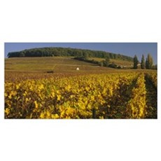 Vineyard on a landscape, Bourgogne, France Poster