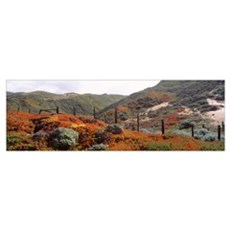 Ice Plant Big Sur Coast Santa Lucia Mountains CA Poster