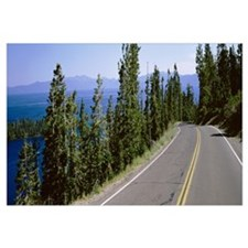 Pine trees on both sides of Highway 89, Lake Tahoe