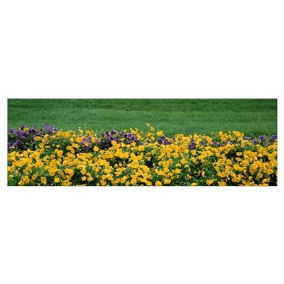 Close-up of pansy flowers on a field Poster