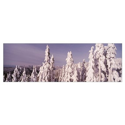 Aerial view of pine trees covered with snow, Grous Canvas Art