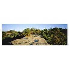 Trees surrounding the Natural bridge, Natural Brid Poster