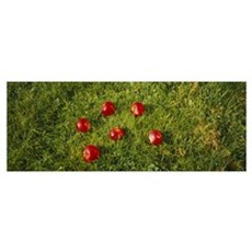 High angle view of red apples on grass, Joutseno, Poster