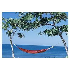 Hammock tied between two trees, Puerto Rico Poster