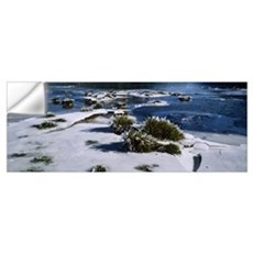 High angle view of foliage in a frozen lake, Hinte Wall Decal