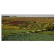 High angle view of a vineyard, Bourgogne, France Poster