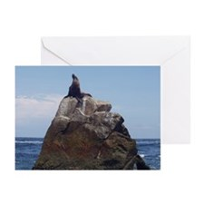 Sea Lion Greeting Cards (Pk of 10)