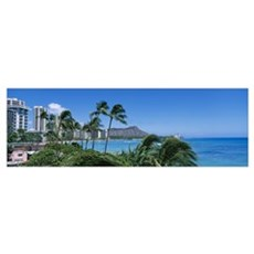 Palm trees on the beach, Waikiki Beach, Honolulu, Poster