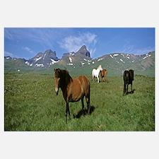 Iceland, Borgarfjordur, Dvrfioll Mountain, Horses