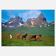 Iceland, Borgarfjordur, Horses standing and grazin