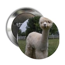 "Funny Alpacas 2.25"" Button (10 pack)"
