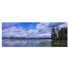 Trees at the lakeside, Raquette Lake, Adirondack M Poster