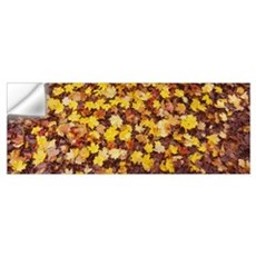 Close-up of fallen leaves, Emery Park, East Aurora Wall Decal